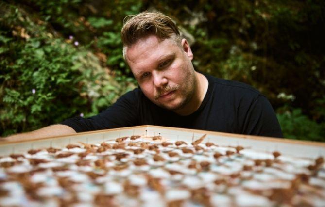 Thomas Hörren schaut auf ein Brett mit drappierten Insekten.
